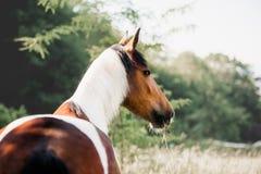 O cavalo bonito está em um fundo das hortaliças imagem de stock royalty free