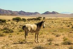 O cavalo branco é admirado em toda sua majestade Fotos de Stock
