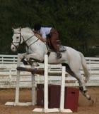 O cavalo cinzento salta Imagens de Stock Royalty Free