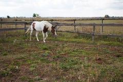 O cavalo com sua cabeça abaixou caminhadas ao longo da cerca fotografia de stock
