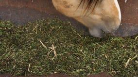 O cavalo come a alimentação da calha filme