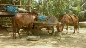 O cavalo come a grama, alimento de alimentação do cavalo video estoque
