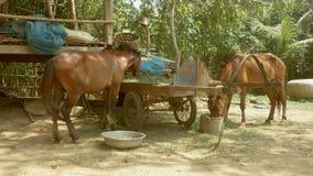 O cavalo come a grama, alimento de alimentação do cavalo filme