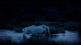 O cavalo cruza o rio na noite video estoque