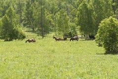 O cavalo de Brown está entre as árvores Fotos de Stock