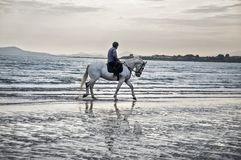 O cavalo de mar imagem de stock royalty free