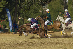 O cavalo do campeonato do mundo de PoloCrosse desliza a ação Foto de Stock