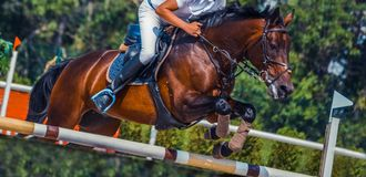 O cavalo e o cavaleiro do adestramento da baía na execução uniforme branca saltam na competição de salto de mostra Fundo do espor Imagens de Stock