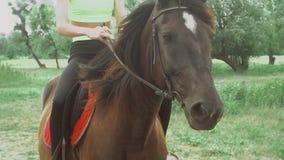 O cavalo e a jovem mulher marrons bonitos sentam-se em um horseback video estoque