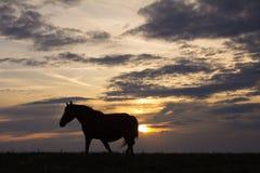 O cavalo está na crista de uma cume gramínea como o por do sol Fotografia de Stock Royalty Free
