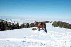 O cavalo está na neve contra o contexto das montanhas foto de stock