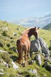 O cavalo livra nas montanhas Fotos de Stock