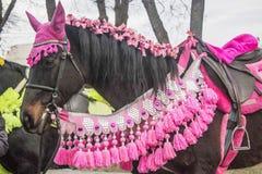 O cavalo marrom é decorado com roupa cor-de-rosa para o en do ` s das crianças fotografia de stock royalty free