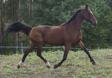 o cavalo marrom está no campo imagem de stock royalty free