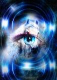 O cavalo no espaço e o olho da mulher e o círculo iluminam-se Conceito animal Efeito do inverno e cor azul Imagem de Stock Royalty Free