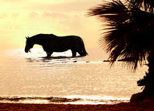 O cavalo no por do sol marinho Fotografia de Stock