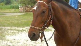 O cavalo novo bonito de Brown está estando na rua video estoque