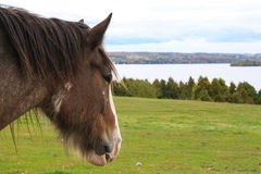 O cavalo olha para o lago Fotografia de Stock Royalty Free