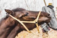 O cavalo pasta na rua em um verão Imagens de Stock Royalty Free