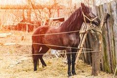 O cavalo pasta na rua em um verão Foto de Stock