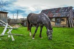 O cavalo pasta perto da casa fotos de stock royalty free