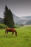 O cavalo pasta sobre foto de stock