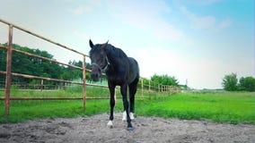 O cavalo preto atrás da cerca do ferro, uma surpresa nova no prado vídeos de arquivo
