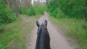 O cavalo preto que anda no caminho na floresta agita sua juba video estoque