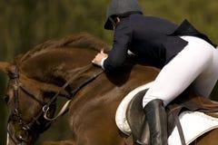 O cavalo que salta 010 Fotografia de Stock Royalty Free
