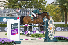 O cavalo que salta - Kamal Bahamdan Imagem de Stock Royalty Free
