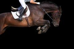 O cavalo que salta no fundo preto Imagens de Stock