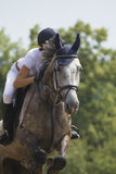 O cavalo Roan salta sobre um obstáculo Fotografia de Stock Royalty Free