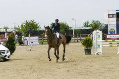 O cavalo salta Fotos de Stock Royalty Free