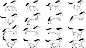 O cavalo salta Imagens de Stock Royalty Free