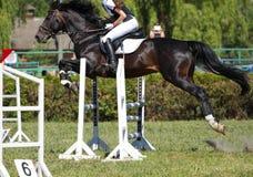O cavalo salta um obstáculo imagem de stock royalty free