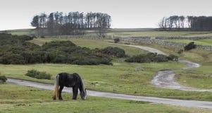 O cavalo selvagem em Askham caiu 3 fotografia de stock royalty free