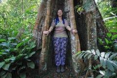 O Ceiba é um gênero das árvores no Malvaceae da família, nativo às áreas tropicais e subtropicais dos Americas e do Afr ocidental imagem de stock
