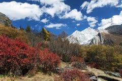 O cenário bonito da montanha da neve fotos de stock royalty free
