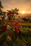 O cenário bonito quando o nascer do sol foto de stock