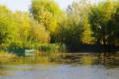 O cenário do outono perto de um lago com amarelo sae em árvores na queda Foto de Stock
