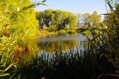 O cenário do outono perto de um lago com amarelo sae em árvores na queda Fotos de Stock