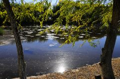 O cenário do outono perto de um lago com amarelo sae em árvores na queda Fotografia de Stock