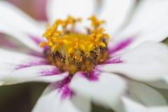 O centro de uma flor fotos de stock royalty free