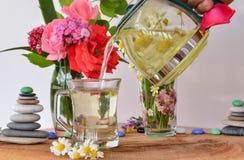 O chá de camomila natural pode Fotos de Stock Royalty Free