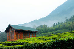 O chá do jardim Fotografia de Stock Royalty Free