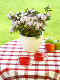 O chá seriu no jardim Fotografia de Stock Royalty Free