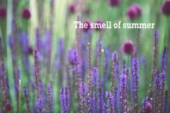 O cheiro do verão Foto de Stock