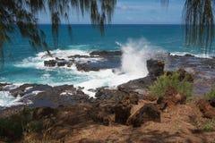 O chifre jorrando, Havaí Imagens de Stock