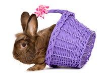 O chocolate bonito coloriu o coelho da Páscoa com uma cesta roxa fotos de stock royalty free