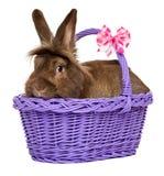 O chocolate bonito coloriu o coelho da Páscoa em uma cesta roxa fotografia de stock royalty free